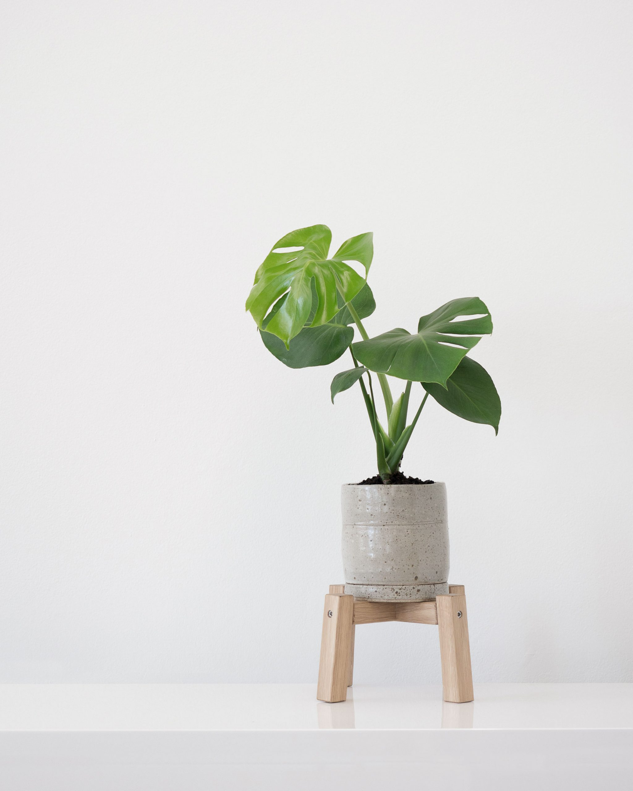 Guide To Indoor Plants - Monstera Deliciosa - Fruit Salad Plant